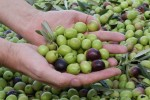 The Secret Health Benefits of Olives